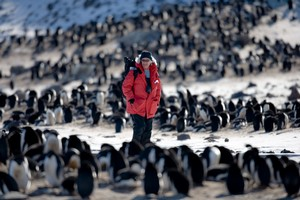Veteran Antarctic Ecologist Dr. David Ainley has been studying penguins in the Ross Sea for more than 30 years.© John Weller.