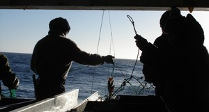 The Ross Sea toothfish fishery is longline only.